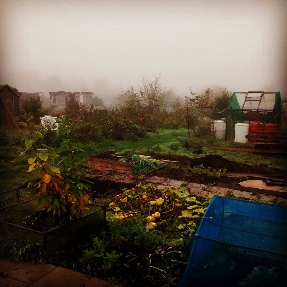 Allotment fog